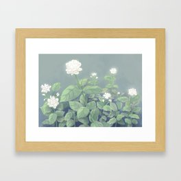 Sampaguita Framed Art Print
