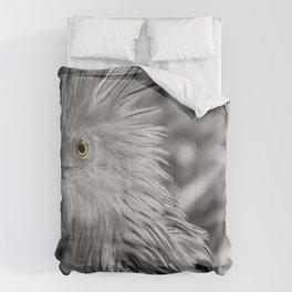 Perspective 2 Comforters