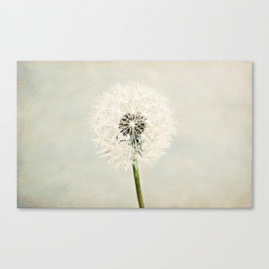 Dandelion Dreams  Canvas Print