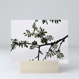 Rowan branch against the sky Mini Art Print
