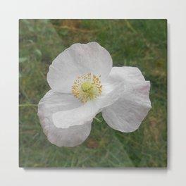 White Flower (California Poppy) Metal Print