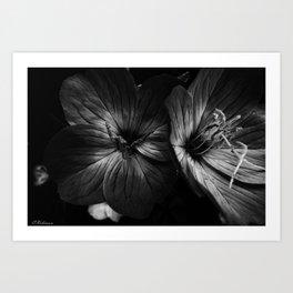 Shades of gray Art Print