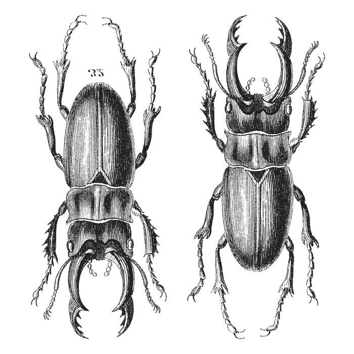 Vintage Beetle black and white Comforters