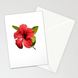 A Red Hibiscus Flower Isolated On White Background  Stationery Cards