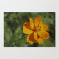 rileigh smirl Canvas Prints featuring Orange Flower by Rileigh Smirl