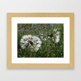 Dandelions Field Framed Art Print