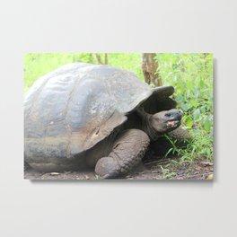 Turtley Turtle (Lonesome George) Metal Print