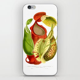 Three Nepenthes Vintage Illustration iPhone Skin