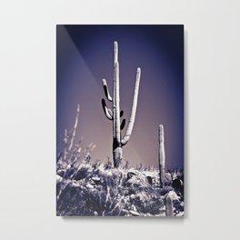 Cactus #21 Metal Print