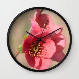 flowering quince Wall Clock