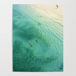 Sharks and Fish Beach (Color) Poster