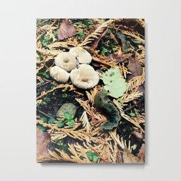 Slugs and Mushrooms Metal Print
