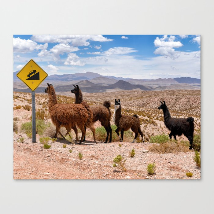 Downhill Llamas Canvas Print