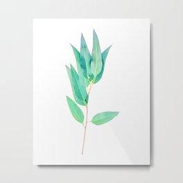 Eucalyptus globulus II Metal Print
