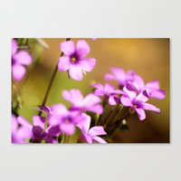 flora Canvas Prints featuring Flora  by MVision Photography