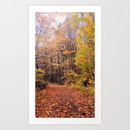 Autumn on the Canadian Shield Art Print