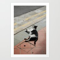 Puss in Haji Lane Art Print