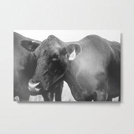 emotional cow Metal Print
