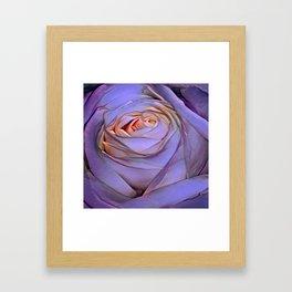 Violet rose Framed Art Print