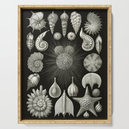 Ernst Haeckel - Thalamphora (Seashells) Serving Tray