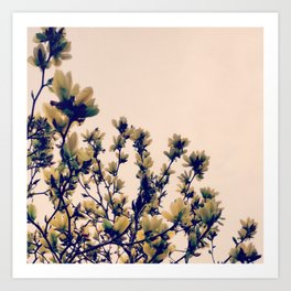 Pale spring Art Print