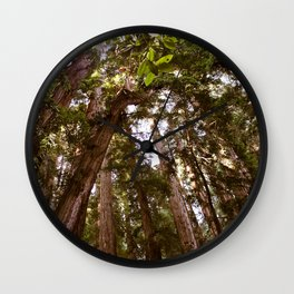 California Redwoods Wall Clock