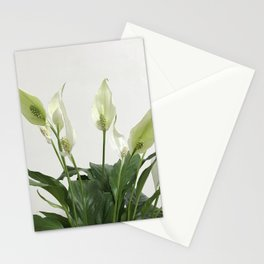 Spathiphyllum Stationery Cards