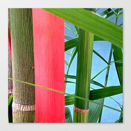 Bamboo Tree Canvas Print