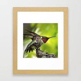 Hummingbird Dominance Framed Art Print