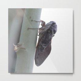 Cicada Vector Metal Print