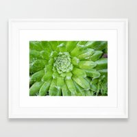 succulent Framed Art Prints featuring Succulent by constarlation