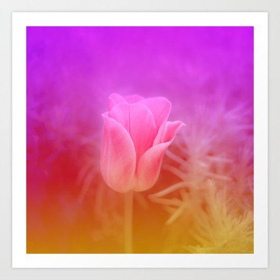 Pinky Tulip Art Print