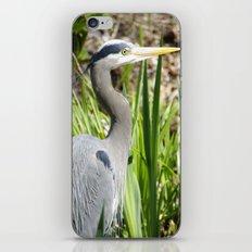 Blue Heron iPhone & iPod Skin