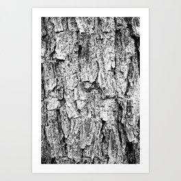 Pinewood Bark Art Print