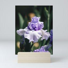 Lavender Iris Mini Art Print