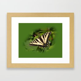 Western Tiger Swallowtail in the Garden Framed Art Print