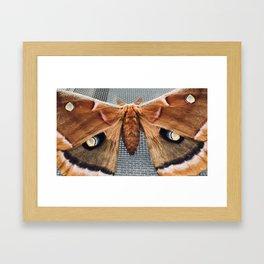 Moth with Eyes Framed Art Print