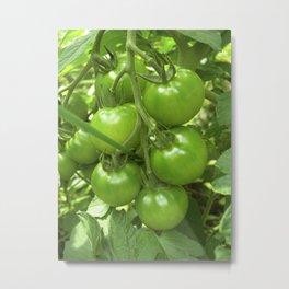 green tomato II Metal Print