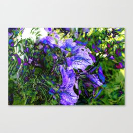 Abstracted Purple Petunias Canvas Print