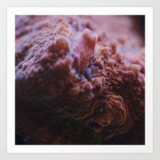 Chalice Coral Macro Art Print