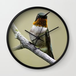 Hummingbird Portrait Wall Clock