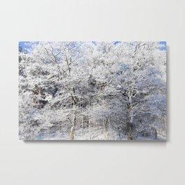 deciduous trees Metal Print