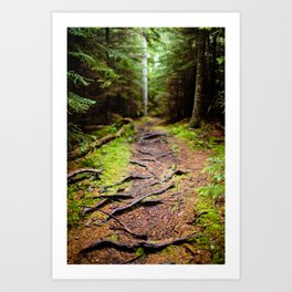 path less traveled Art Print