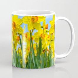 Golden daffodil narcisus flowers vibrantly coloured against bright blue sky Coffee Mug