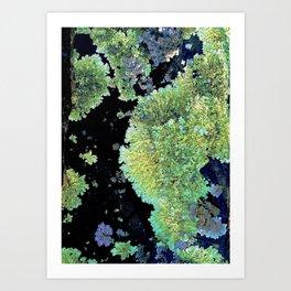 Shield Lichen Art Print