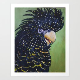 RED TAILED BLACK COCKATOO  Art Print