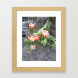 A cactus in its bloom Framed Art Print