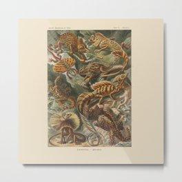 Vintage Lizards Metal Print