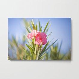 Nerium oleander 2 Metal Print