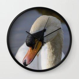 Mute swan cob Wall Clock